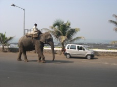 How do you stop an elephant from walking down the middle of the road? You don't.