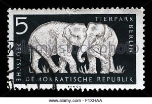 stamp-printed-in-gdr-shows-elephant-berlin-german-zoological-garden-f1xhaa